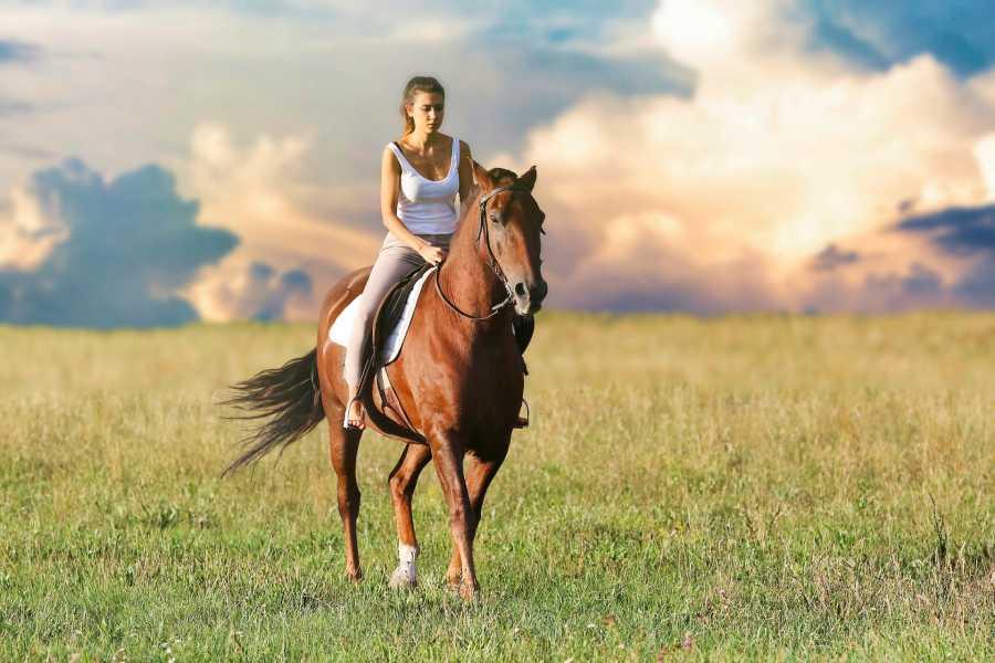 Turistico s.r.o. Horseback riding