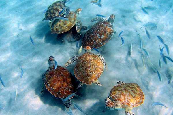 Jan Thiel Diving Westpoint Snorkel/Dive Tour