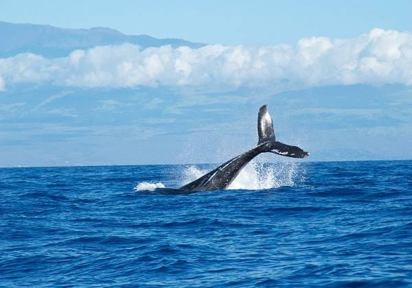 Half-Day Whale Watching in Mauritius