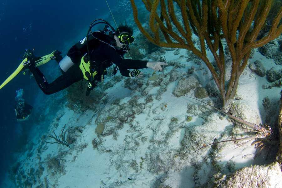 Jan Thiel Diving PADI Instructor Development Course