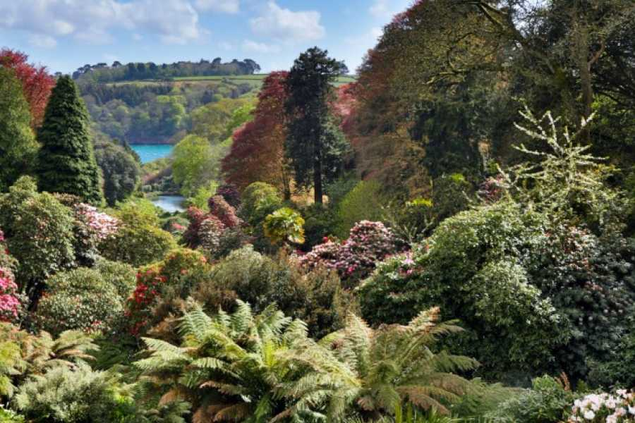 Oates Travel St Ives Trebah Gardens, Tuesday 28th May