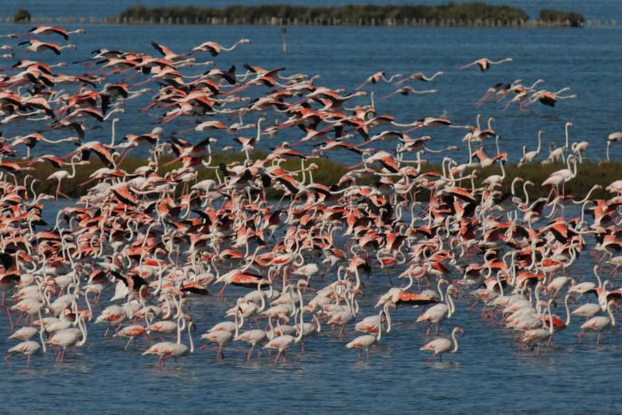 Ravenna Incoming Convention & Visitors Bureau Discover Flamingos by Bike