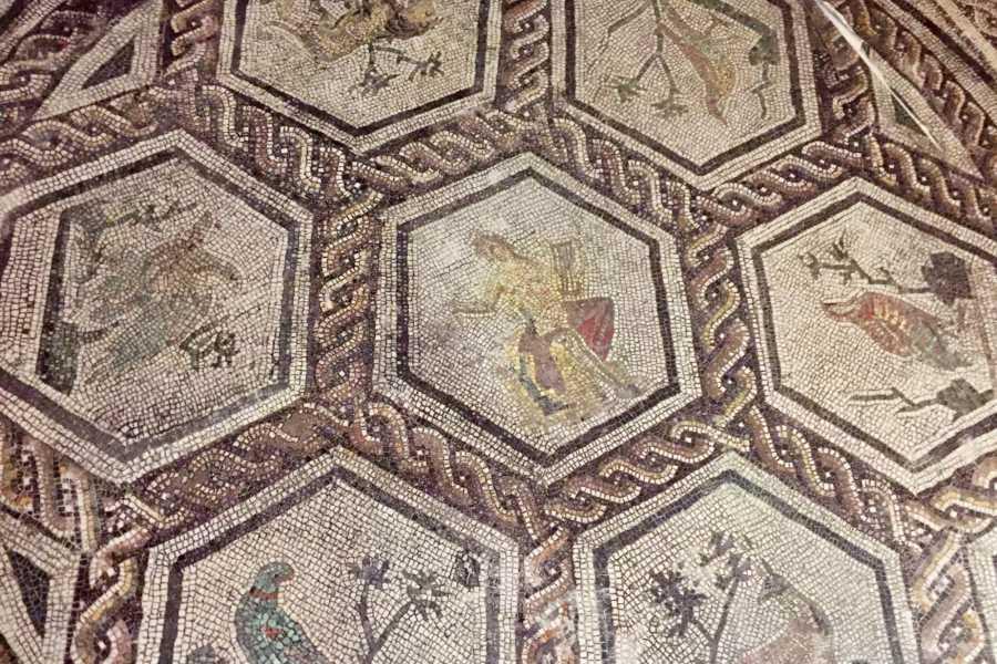 Rimini Reservation I Mosaici di Ariminum