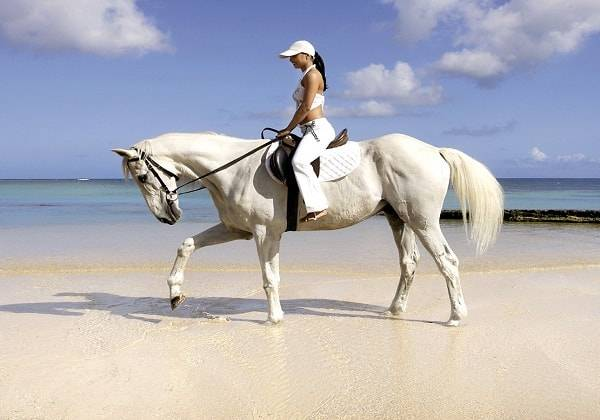 Horse Ride on the beach in the North of Mauritius