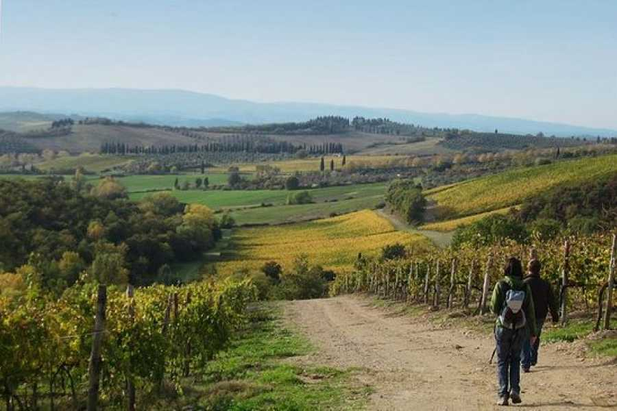 Italy on a Budget tours HIKING & PIC NIC IN TUSCANY