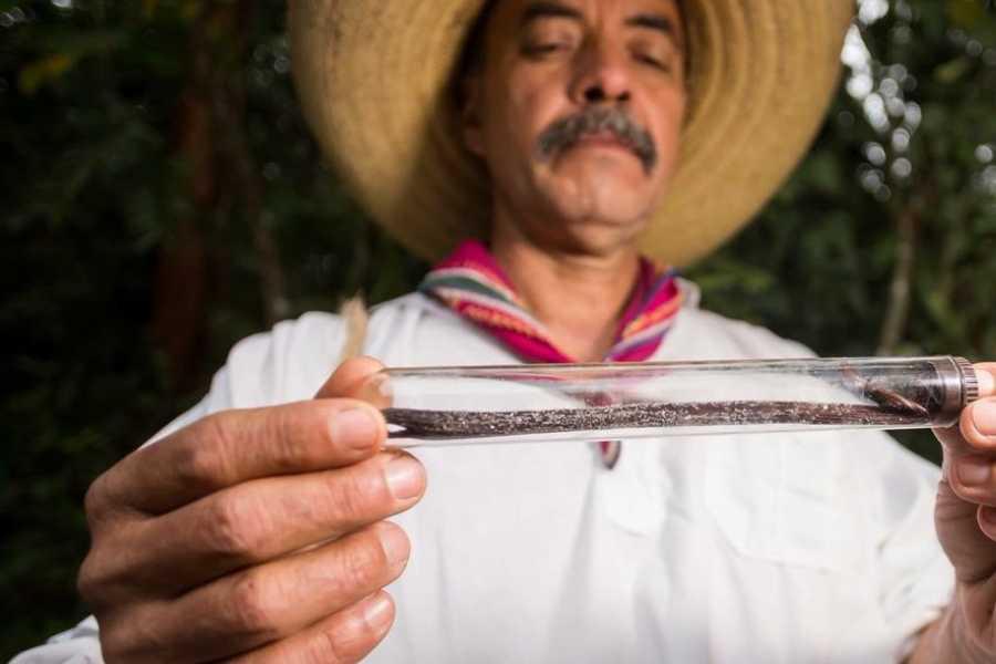 Tours y Tickets Operador Turístico Un mundo de vainilla - Paquete de 2 días y 1 noche en Papantla