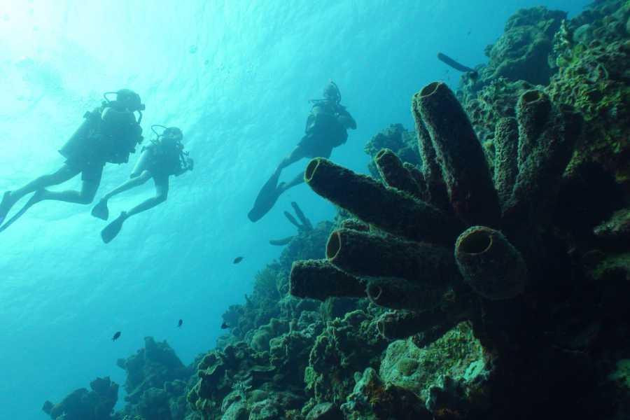 Coral divers PADI Scuba Diver Cursus