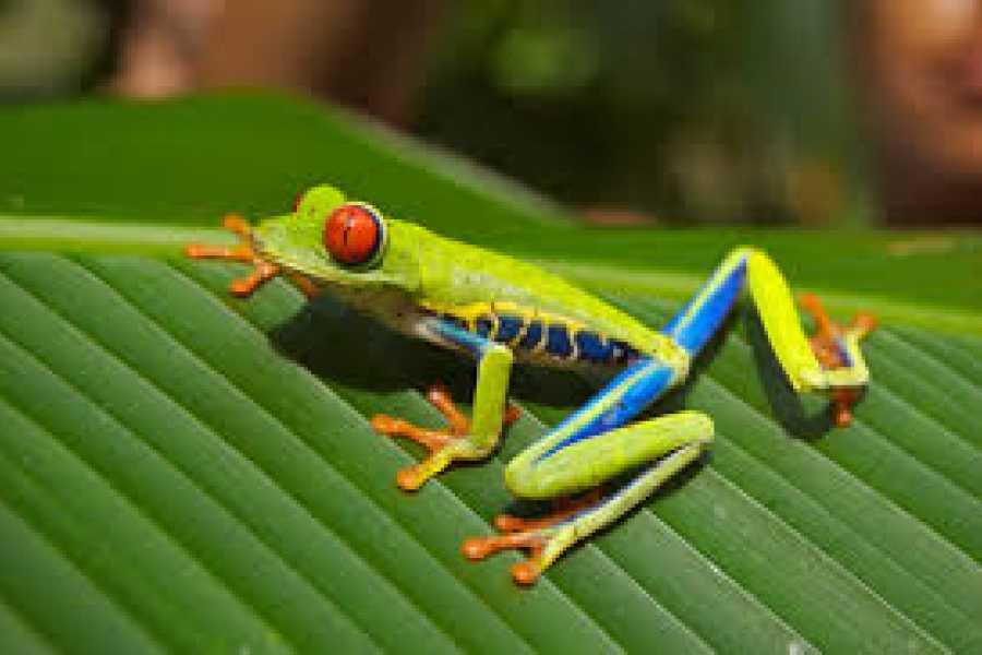 Tour Guanacaste Private Reptiles & Amphibians Expedition