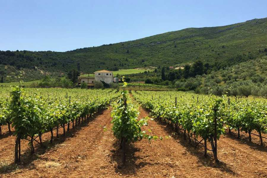 Grekaddict Nemea Private Wine Tour