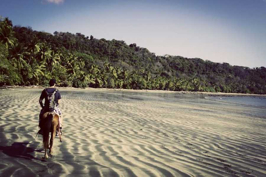 Lizard Tours Beach Horseback Riding