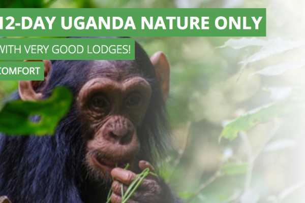 12-Day Uganda Nature Only