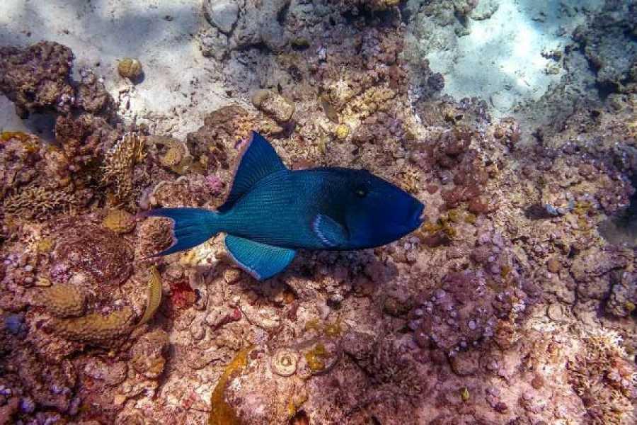Journey To Egypt Snorkeling at Mahmya Island, 1 day Hurghada tour
