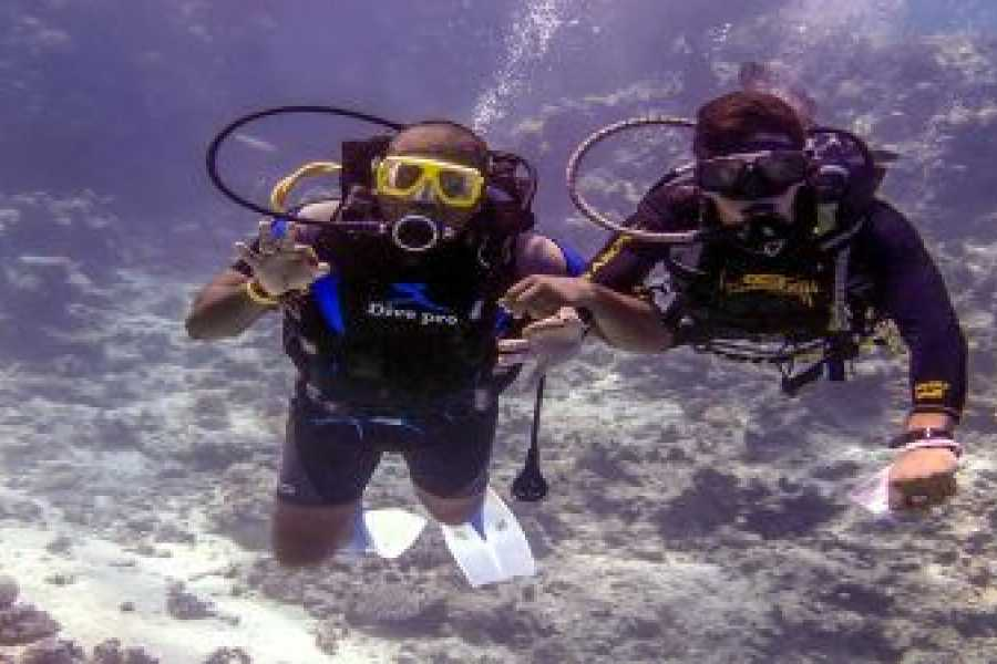 Journey To Egypt Paradise Island Snorkeling Trip, Active day in Hurghada