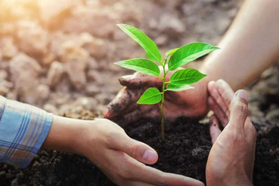 TourRJ.com Plant and Sponsor a Tree Online.