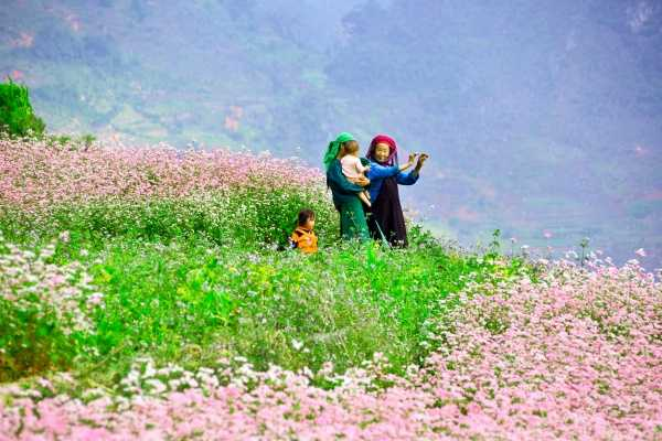 Vietnam 24h Tour Tour Hà Giang mùa hoa Tam giác mạch
