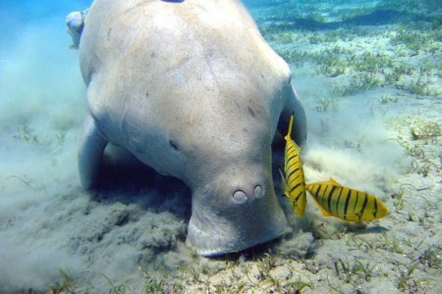 Excursies Egypte Abu Dabab day Snorkeling Tour from El Gouna
