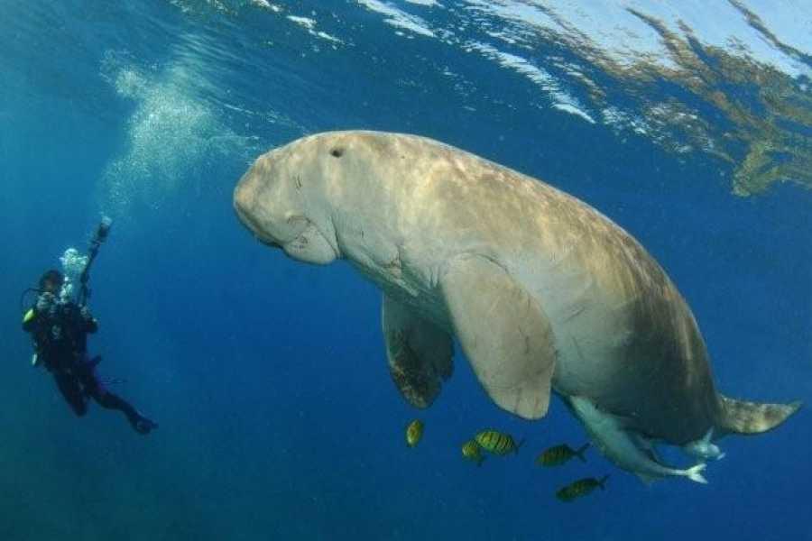 Excursies Egypte Abu Dabbab Dugong Snorkeling Trip From Sahel Hashesh