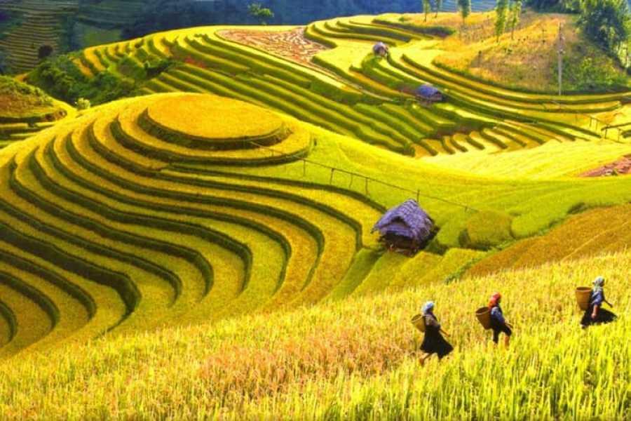 OCEAN TOURS Essential Vietnam