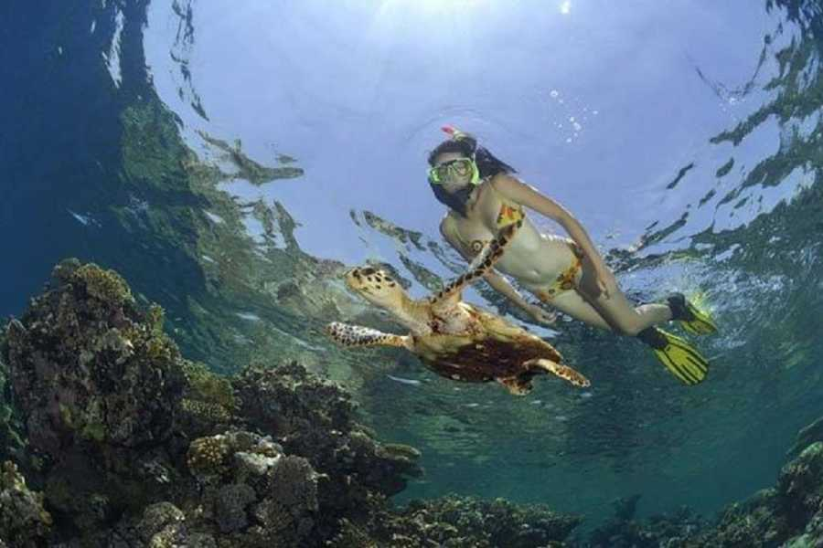 Excursies Egypte Giftun Island Snorkeling Tours From Soma Bay
