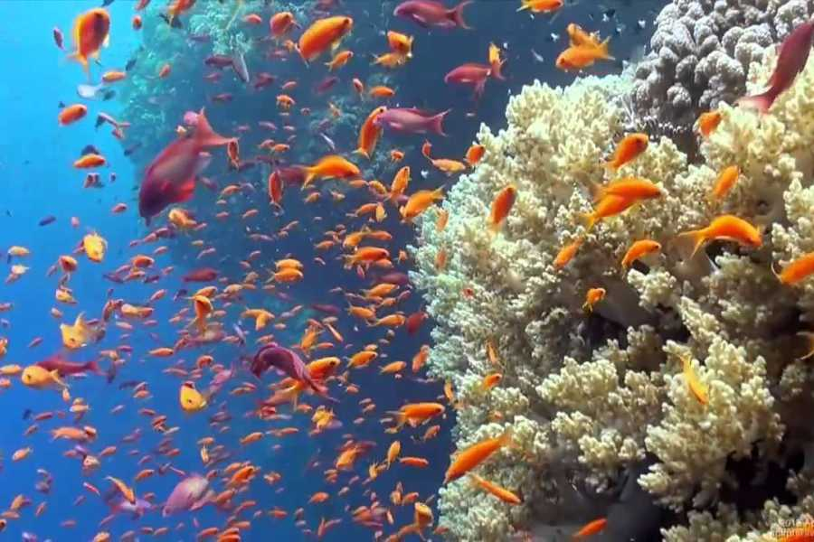Excursies Egypte Snorkeling Trip To hamata Island from Port Ghalib