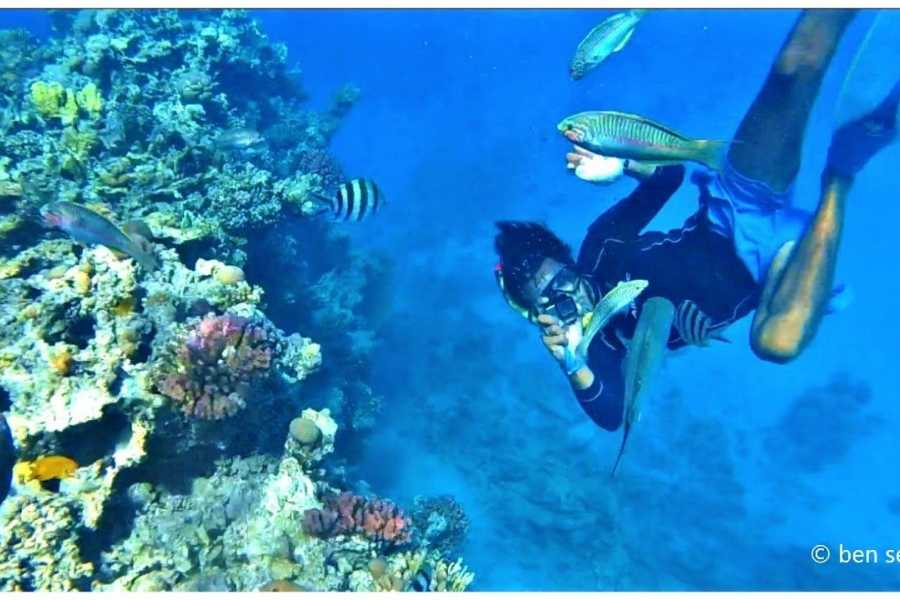 Excursies Egypte Scuba diving Trip from Sahel Hashish