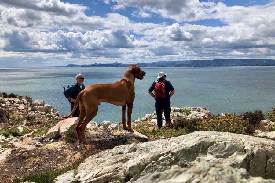 Shane's Howth Adventures Howth Coastal Walk