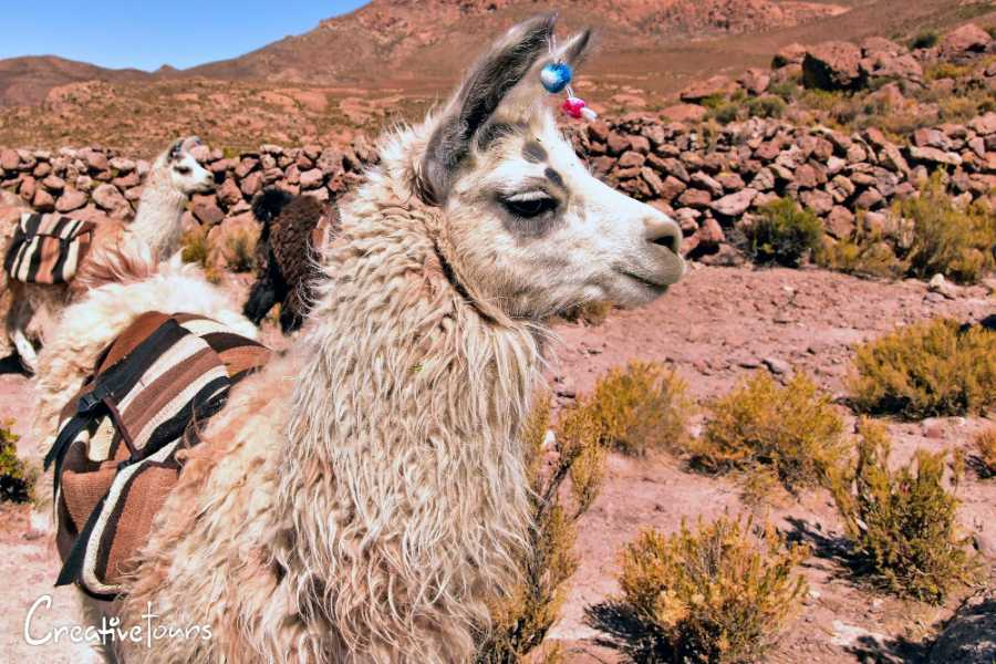 Uyuni Expeditions LLAMA CARAVAN 4 HOURS (DRY SEASON)