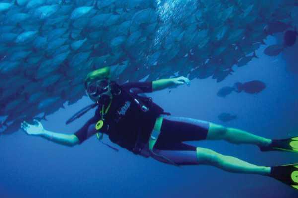 2 Tank Scuba Dives at Catalina Islands