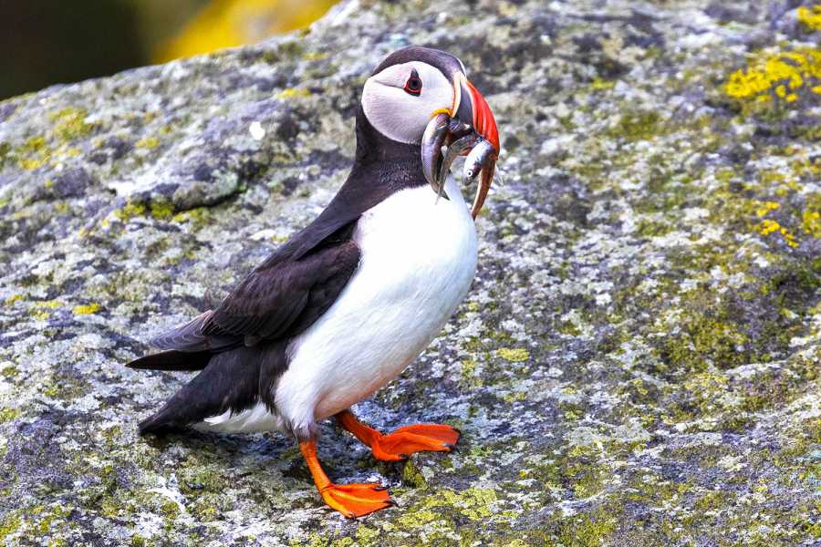 Hebridean Adventures Secrets of Skye and the Small Isles Cruise