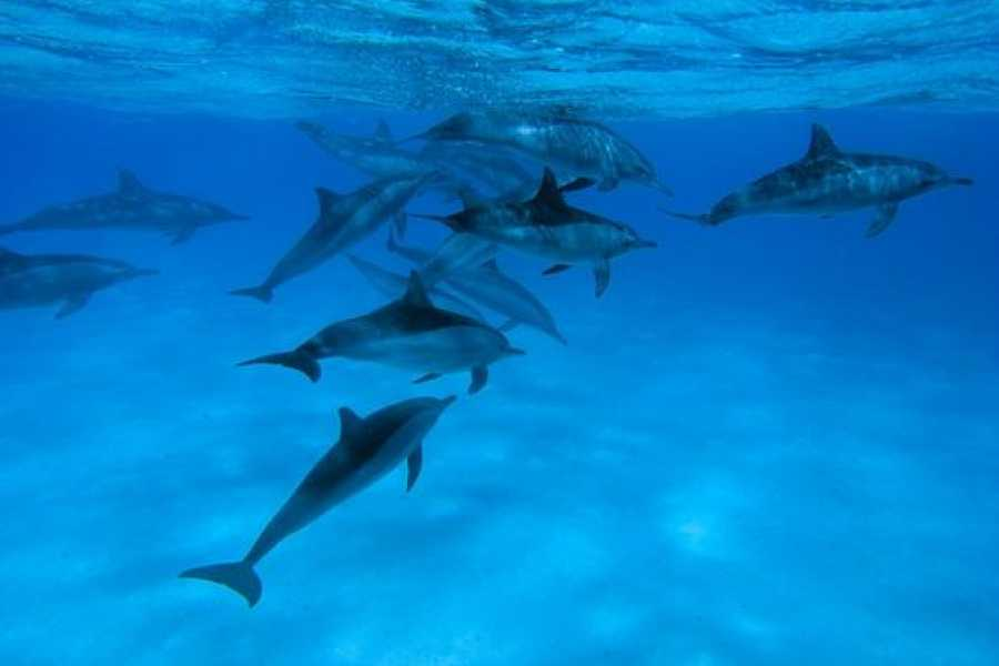 Marsa alam tours Overnight Diving trip at Sataya Dolphin Reef From Port Ghalib