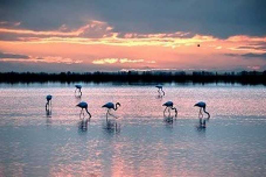 Cervia Turismo Cervia Salt Pan by Boat + Shuttle from Milano Marittima