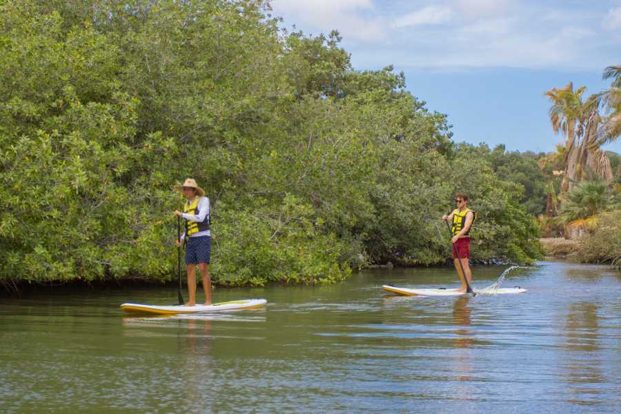 Groove Diving Kayak/SUP Guided Tour