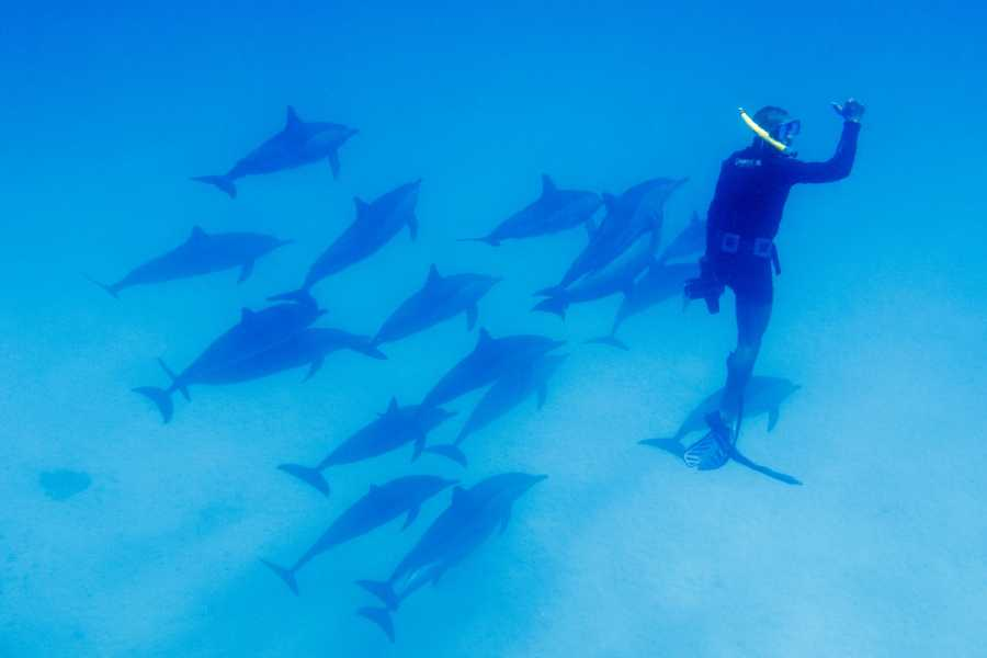 Marsa alam tours Overnight Diving trip at Sataya Dolphin Reef From El Quseir
