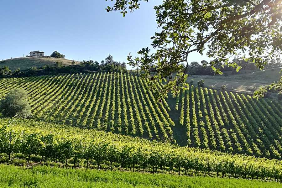 Bologna Welcome Wine Trekking