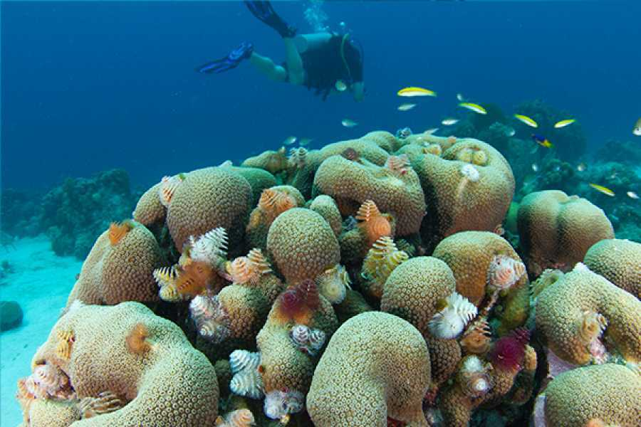 Coral divers PADI Underwater Naturalist Specialty