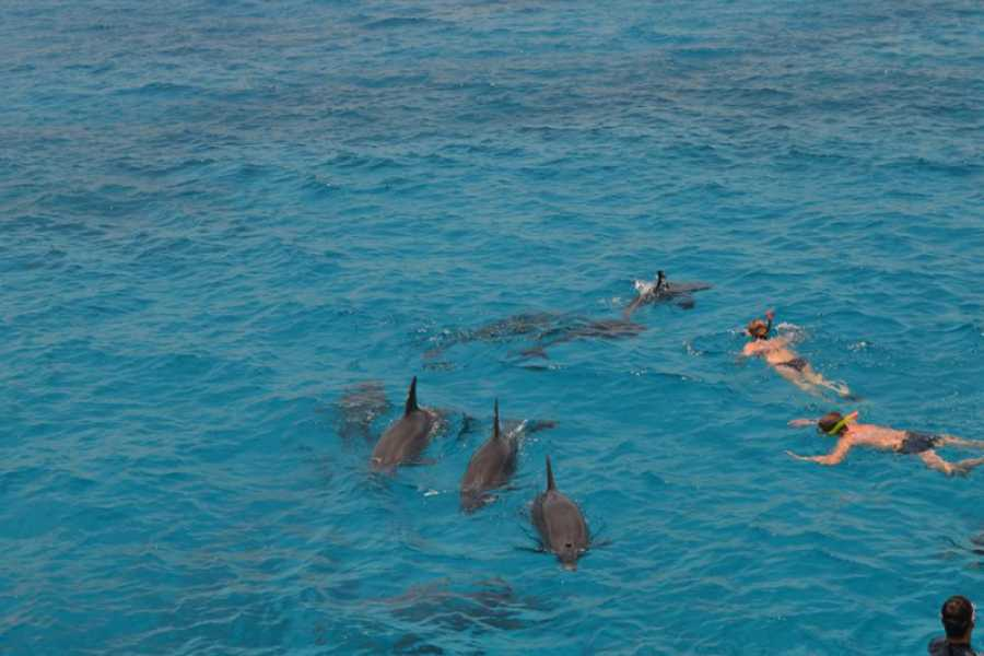 Marsa alam tours Dolphin house Tour From Sahel Hasheesh