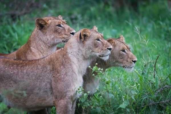 1-Day Tanzania Joining Safari - Ngorongoro Crater -- with -- Burigi Chato Safaris Co L.T.D