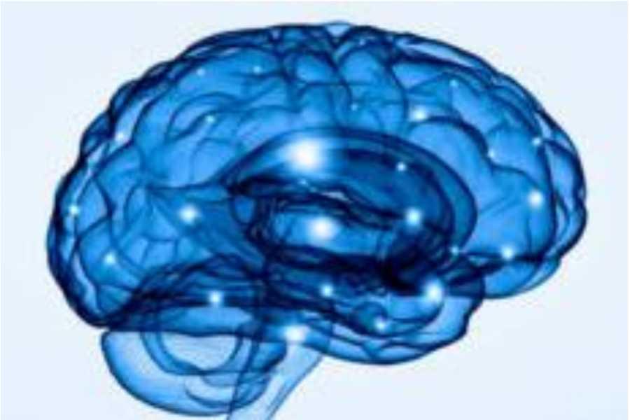 Uvita Information Center La puissance du Cerveau