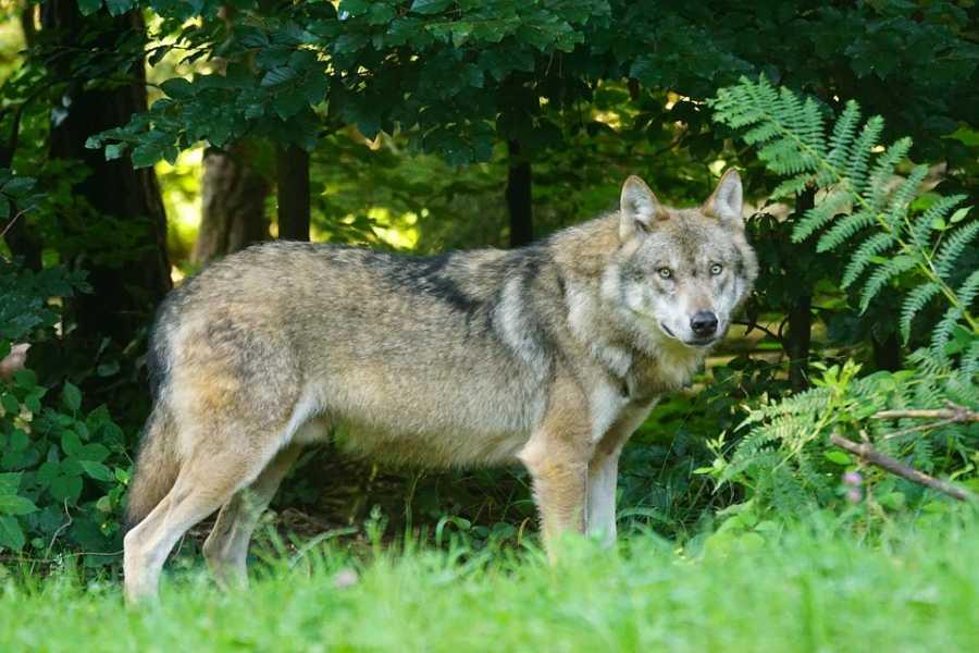 Bologna Welcome - AppenninoSlow Il sentiero del lupo