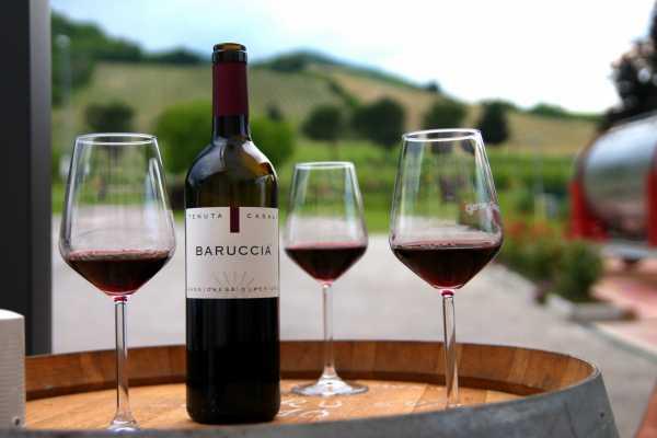 Vigne, Vini, Chef - I Percorsi del Savio