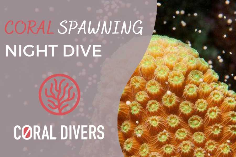 Coral divers Coral Spawning Guided Night Dive.