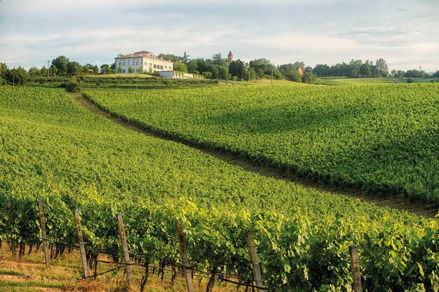 Bologna Welcome Umberto Cesari Wine Tour: la tipicità