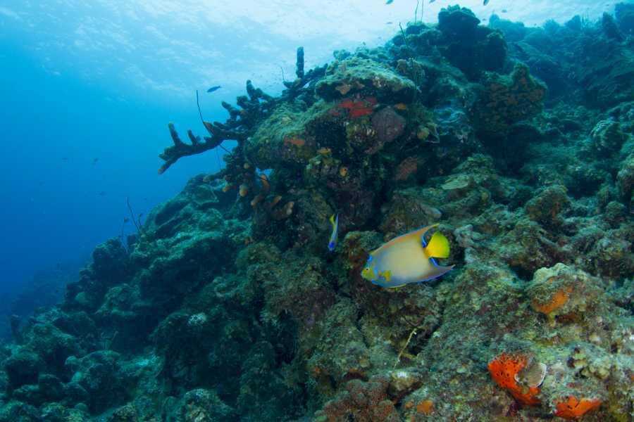 Blue Bay Dive & Watersports Begeleide Huisrif Duikpakket
