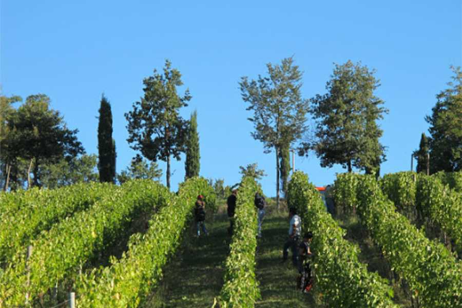 Visit Rimini TASTING AND VISIT AMONG VINEYARDS, OLIVE TREES, ANIMALS AND TRAILS