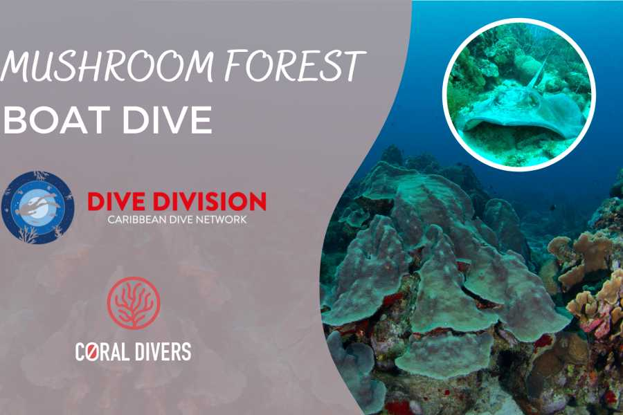 Coral divers Mushroom Forest 2 Tank Guided Boat Dive October 9th 2020