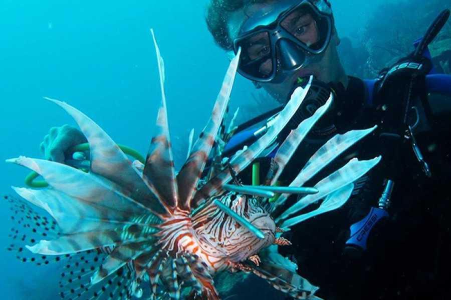 Blue Bay Dive & Watersports PADI Ivasieve Koraalduivel Specialty (Lionfish)