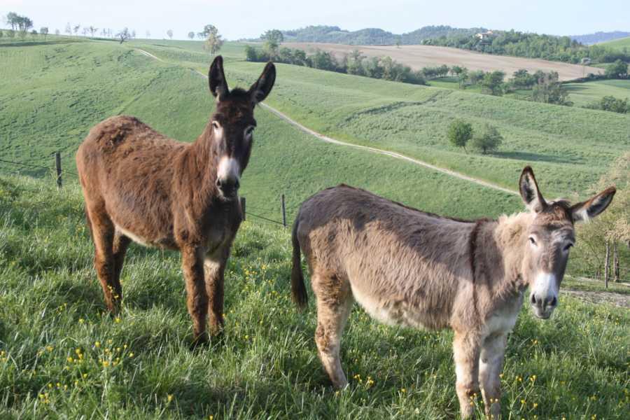 Modenatur In bici alla scoperta del territorio di Reggio Emilia e pranzo in agriturismo