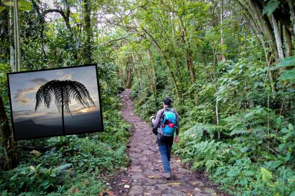Andes Ecotours Chicaque Cloud Forest Hike U$75