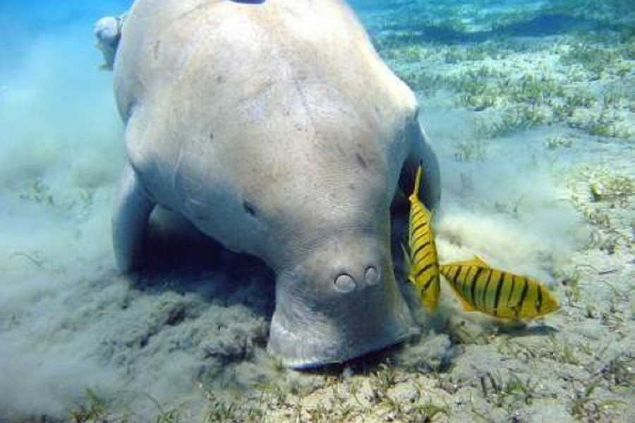 El Gouna Tours Abu Dabbab Dugong snorkeling excursions from Marsaalam