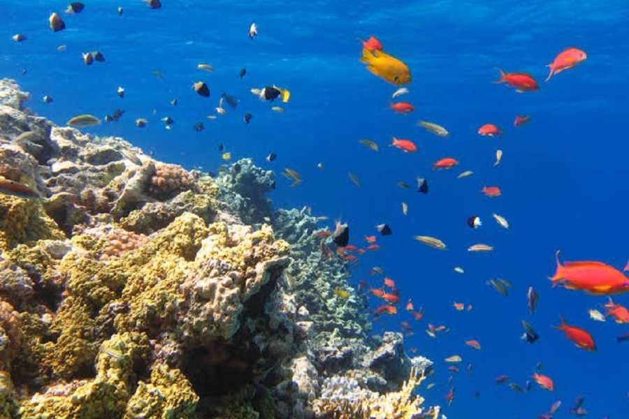 El Gouna Tours Sharm El Naga Bay Snorkelling Trip From Hurghada